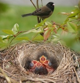 So How Exactly Do You Feed a Baby Bird?