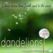 Picture Story: Dandelions